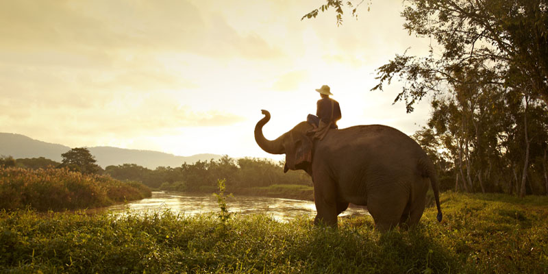 Elephant Discovery Experience