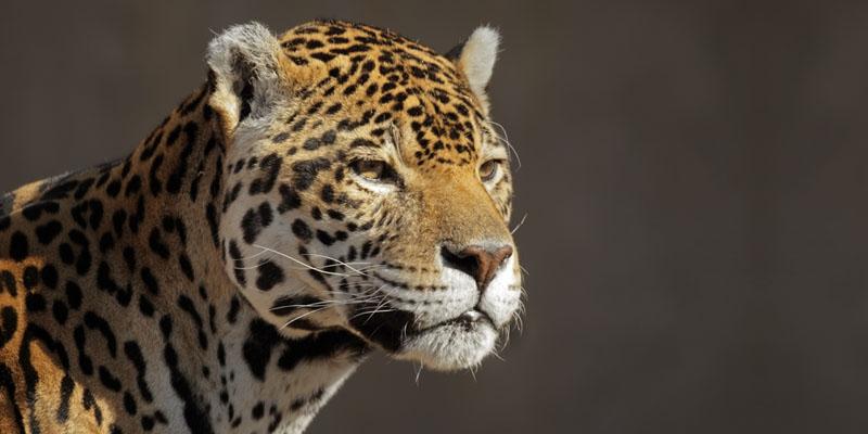 Africa Wildlife Experience